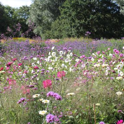Landschaftsbau  Vonthorshamar - Garten und Landschaftsbau